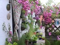 Mullview Garden and Home maintenance