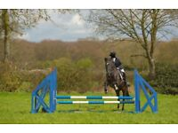 15.1hh tb mare horse for share/part loan