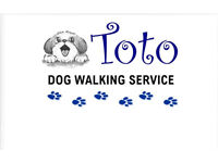 Professional Dog Walker ~ Garnethill, Charing Cross, Kelvingrove, Woodlands & City Centre North