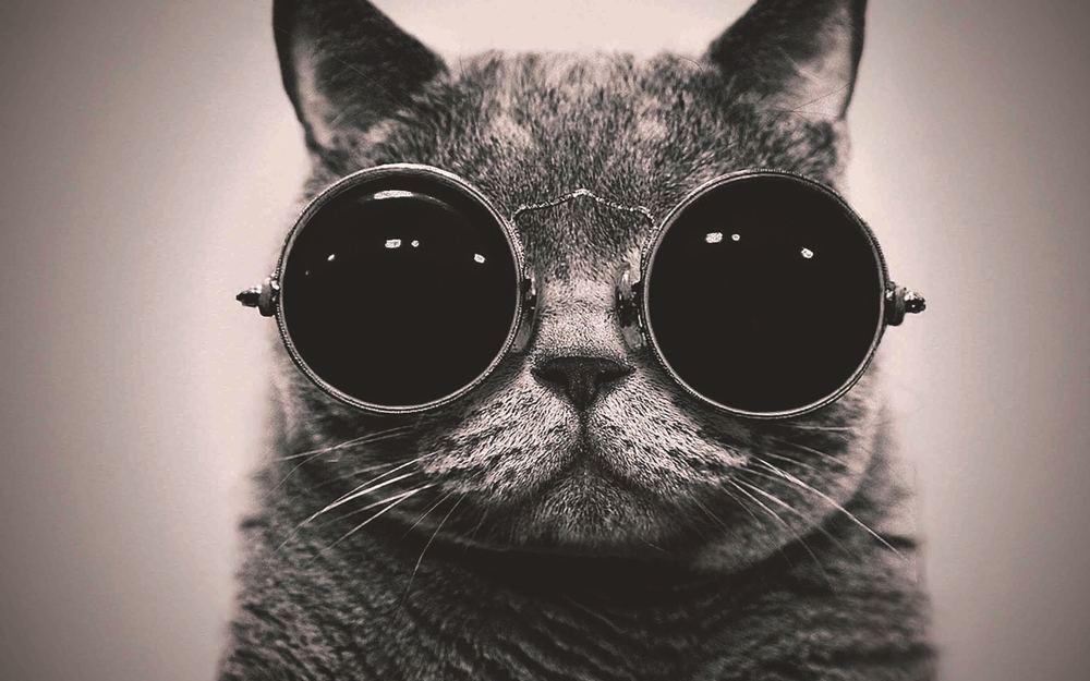 FUNKY CAT