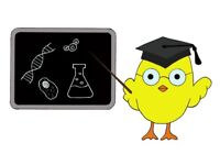 Cambridge Science Tuition (optional online) from a PhD qualified female tutor (DBS checked)