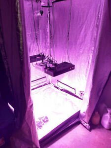 Grow tent 4x4 feet with 532W Actual LED Power