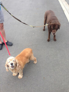 Dog Walking, cat care and pet taxi services with a cause!