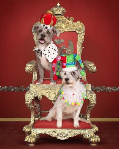Crown & Jester Party Hat for Cat/Dog and Side Collar; Includes carrying case