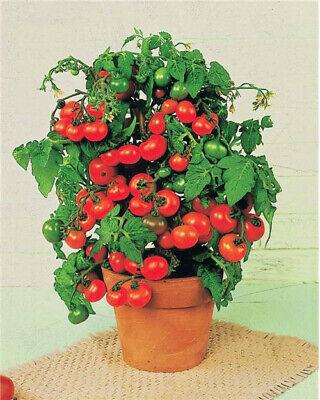 """Graines """"10 variétés de tomate"""" (Lot6)"""