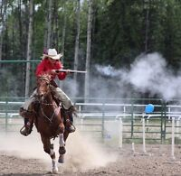Experienced shooting horse for sale, quarter horse