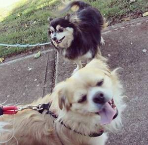 FREE dog walker South Yarra Stonnington Area Preview