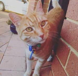 Cat Caring Sitting Service Kelmscott Armadale Area Preview