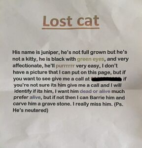 HELP THIS LITTLE GIRL FIND HER CAT