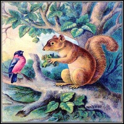 30 Custom Vintage Squirrel Bird Art Personalized Address Labels