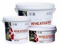 Koi Winter Wheatgerm for Sale