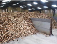 Dry hard wood.  Xmass special