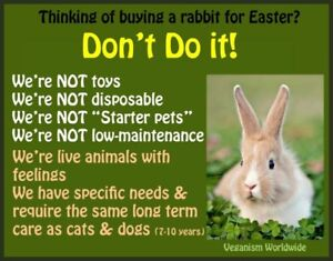 Common Myths about Bunnies/Pet Rabbits