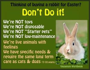 ** Common Myths About Bunnies| pet rabbits**