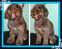 Dog Grooming In N.W Available today :)