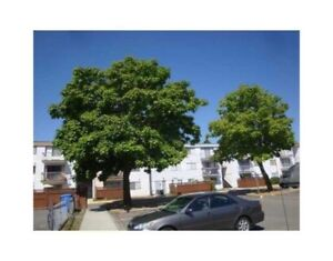 Very clean, specious one bedroom apartment