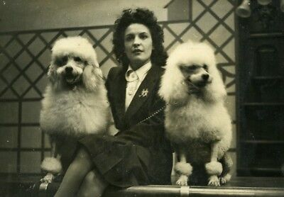 France paris dog show royal poodles from ile d'or caniches old press photo 1947