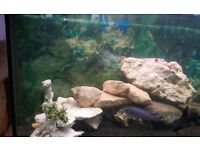 3ft Juwel Vision Fish Tank Aquarium Full Malawi Setup