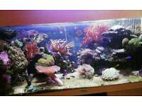 Marine fish tank - corals live rock
