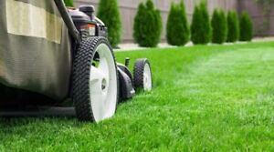 Rico's Lawn maintenance and landscaping