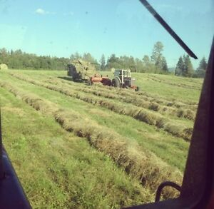 4x6 Round Bales & Small Square Bales of Hay