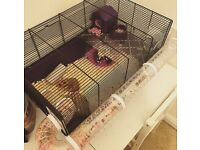 Syrian Hamster with Cage, Food and Ball.