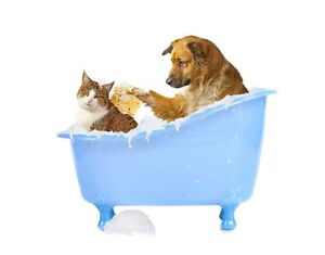 Pet Grooming Services in Brooks