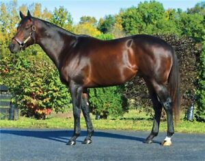 RECHERCHE Thoroughbred ou warmblood