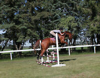 Hunter/Jumper Facility -has room for Outdoor  HORSE BOARD