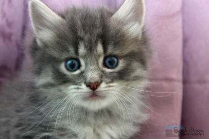 India rescue KITTEN to adopt VET WORK INCLUDED