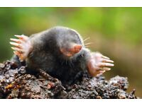 Mole Control in Inverness and surrounding area