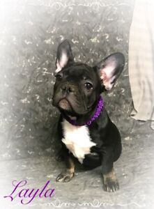 Adopt Dogs Puppies Locally In Red Deer Pets Kijiji Classifieds