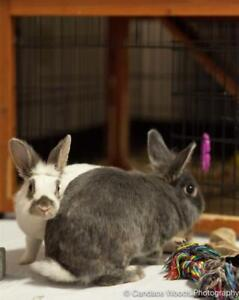 "Young Female Rabbit - Mini Rex: ""Velveteen With Violet"""