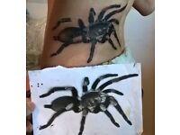 SevenNeedles Tattoos - £30 ph