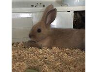 X 2 rabbits