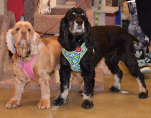 **Outgoing Benson & Autumn -are available for adoption***
