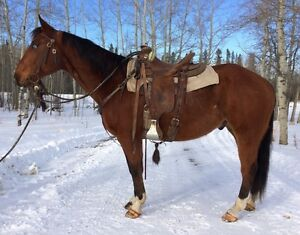SELECT SPRING RANCH HORSE SALE APRIL 22 RIMBEY