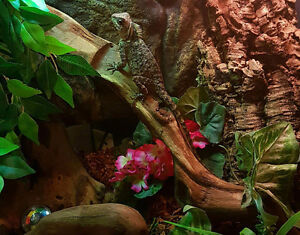 Reptile rescue and rehoming