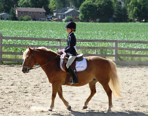 Private lessons on great pony for youth rider