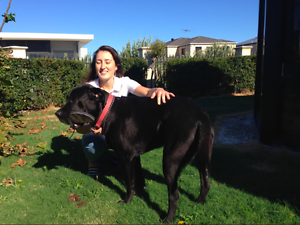 Pet Sitting, Reliable and Negotiable! Ocean Reef Joondalup Area Preview