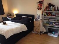 Large Room with Ensuite Available in Awesome House