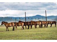 Riding holiday Mongolia - Naadam festival July 2018