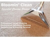 Carpet & Upholstery Cleaning Services - Felixstowe, Ipswich, Suffolk area