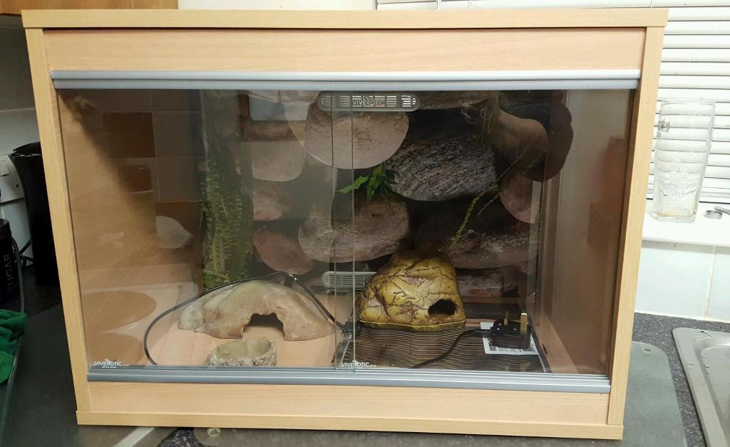 Reptile vivarium