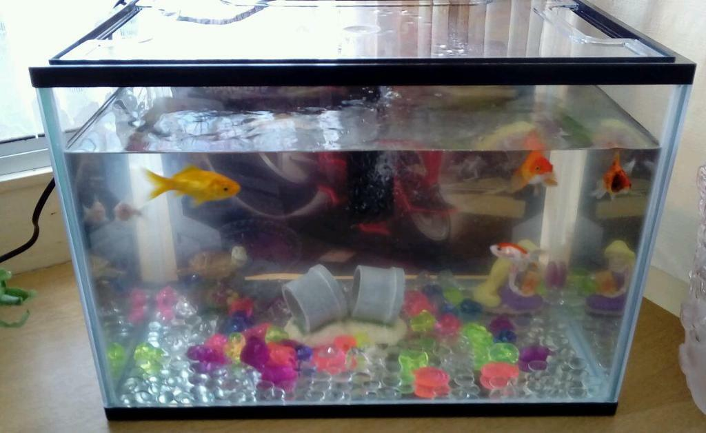 Catfish For Sale >> 24 litre fish tank | in Queenborough, Kent | Gumtree