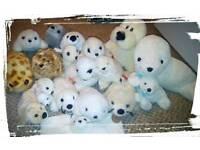 Seal soft toy collection