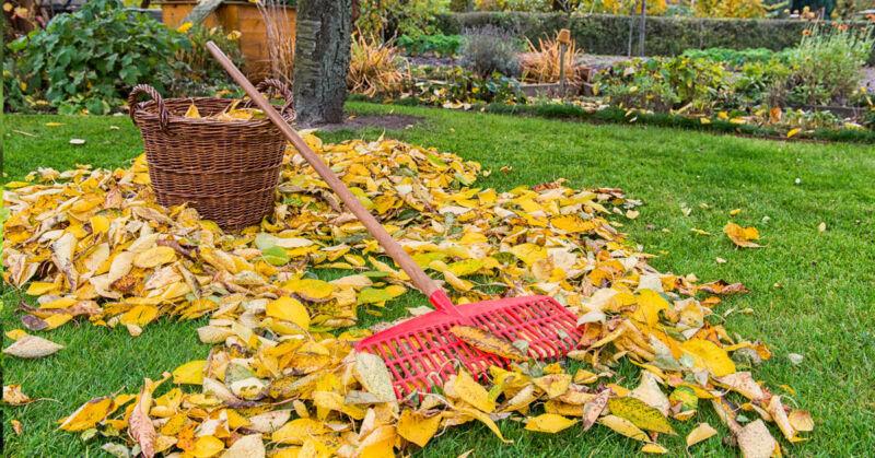 Der Rasen sollte komplett vom Herbstlaub befreit werden - nicht nur aus optischen Gründen. (© Thinkstock / The Digitale)