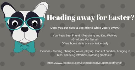 Pet Sitting & Dog Walking (Graduate Vet Nurse)