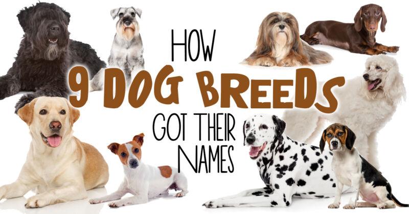 How 9 Popular Dog Breeds Got Their Names   eBay