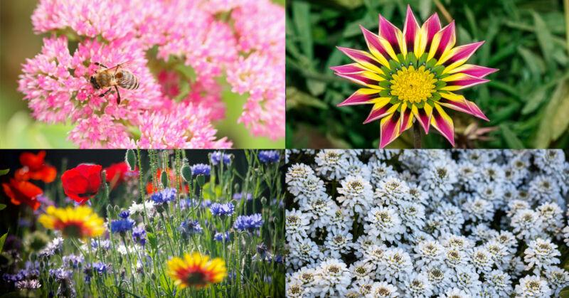 Mit den richtigen Pflanzen musst Du bei der Gartenarbeit kaum einen Finger rühren. (© Thinkstock via The Digitale)